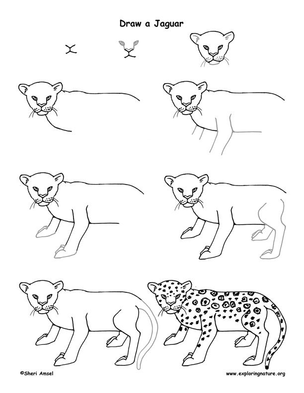 how to draw animals easy pdf