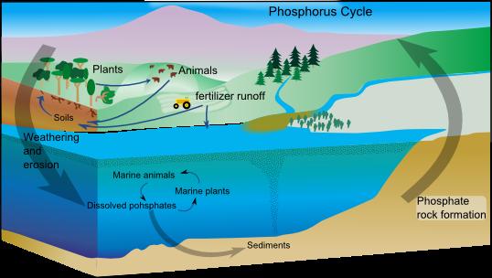importance of freshwater ecosystem pdf