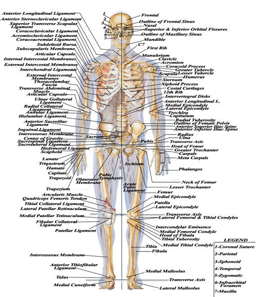 human body parts name with picture pdf