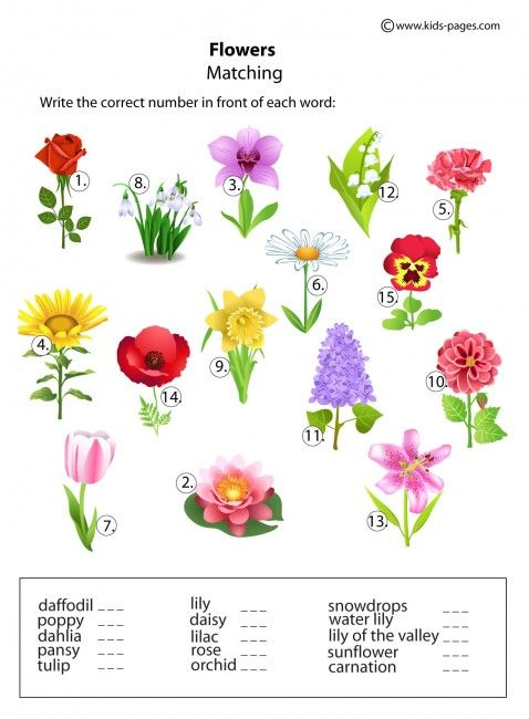 kinds of flowers with name and picture pdf
